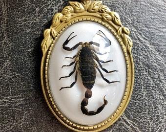 Real Big Black Scorpion Arachnid Specimen in Resin Cameo Dead Bug Entomology Vulture Culture Necklace