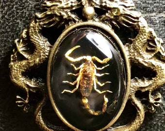 Double Dragon Golden Scorpion Specimen on Black and Bronze Cameo Vulture Culture Entomology Necklace