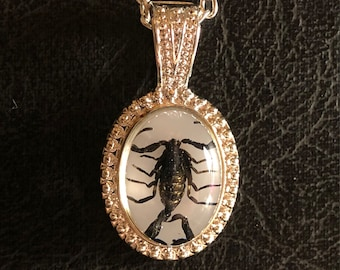 Tiny Black Baby Scorpion Specimen in Resin Cameo Vulture Culture Entomology Taxidermy Petite Necklace