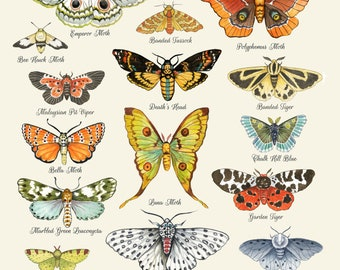 Moth Chart Print, Moth Art, Moth Poster, Insect Art, Butterfly, Lepidopterist, Entomology,  Lepidopterology, Entomological, Science