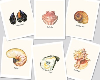 Seashell Cards, Set of 6 Sea Shell Notecards, Shell Art Cards, Botanical, Types of Shells,  Summer, Seashore, Vacation