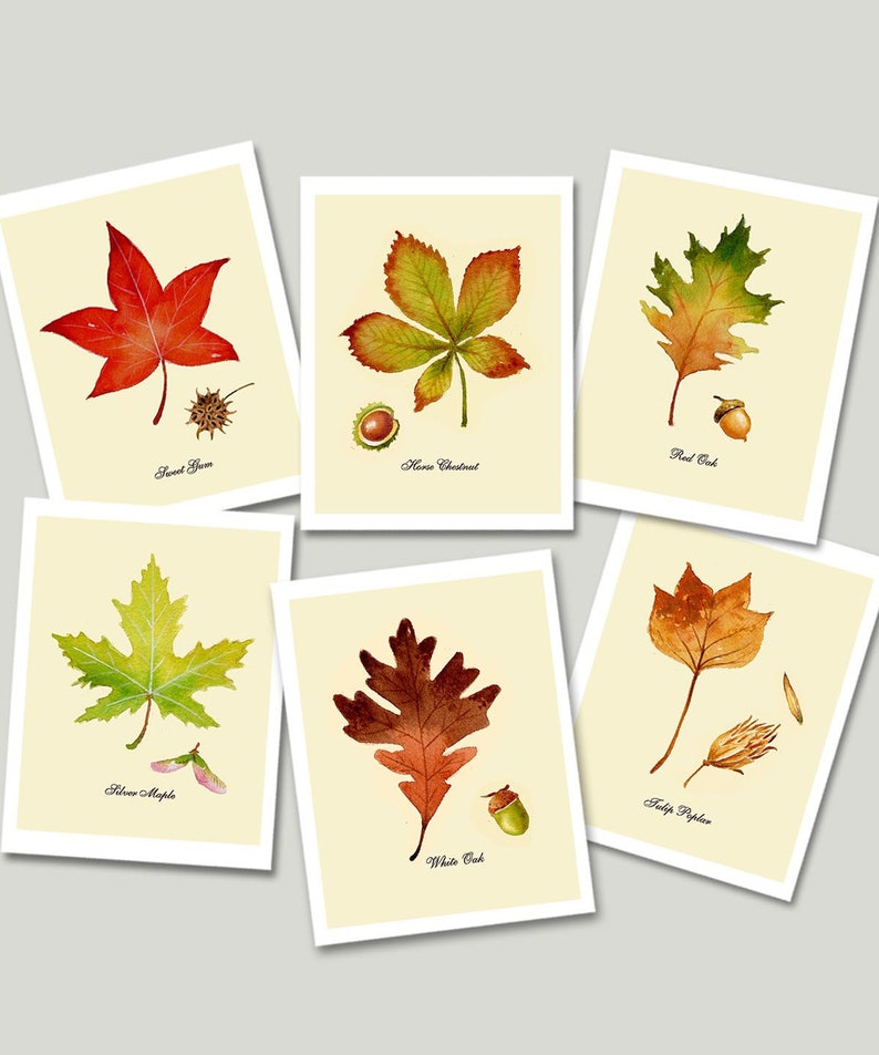 Autumn Leaf Cards  Note Cards Fall Cards Thanksgiving image 0