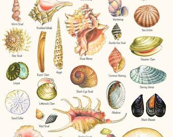 Seashell Print - Shell Varieties Print - Shell Chart -Summer Art - Beach Print - Beach House Decor