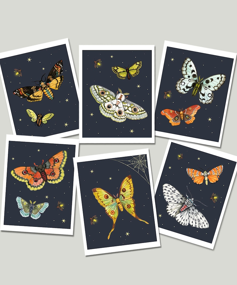 Moth and Firefly Cards Moth Notecards Insect Card Set Night image 0