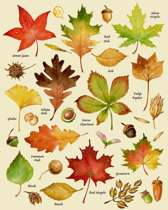 Epic image with regard to fall leaves printable