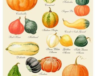 Pumpkin Print - Pumpkin Art - Pumpkin Chart Print - Harvest Print - Autumn Print - Thanksgiving Print - Halloween Print - Pumpkin Varieties