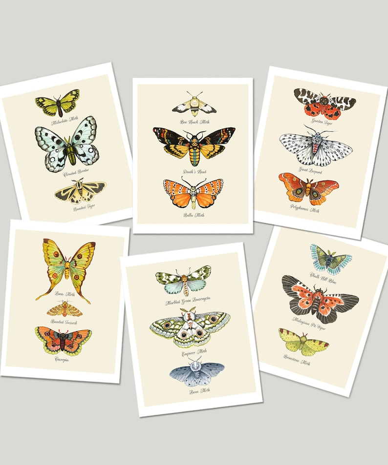 Moth Cards Moth Chart Notecards Naturalist Card Set Insect image 0