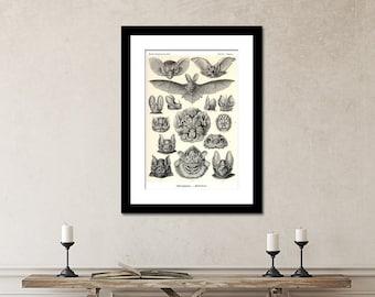 Bats Print, Vampire Bats, Poster, Art Nouveau Ernst Haeckel Print, Science Print, Bats Illustration, Educational Print