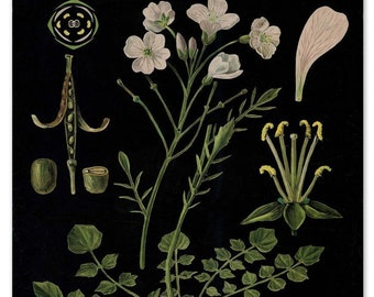 Botanical Print, Cottage Core Wall Art,  Botanical Illustration, Floral Wall Art, Bright Flowers on Vintage Black, Cuckoo Flowers Print