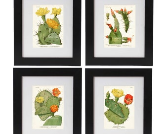 Cactus Print Set of 4, Cactus Posters, Southwestern Art, Desert Decor, Desert Art, Botanical Prints, Cactus Blossoms, Prints and Posters