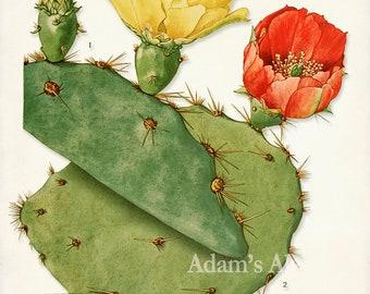 Cactus Print, Cactus Poster, Red and Yellow Cactus Blossoms,Botanical Art Print, Desert Decor, Desert Art, Desert Print, Desert Plants