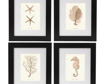 Nautical Print Set of 4, Coastal Wall Art, Coastal Decor, Posters, Seahorse Print, Coral Prints, Starfish Print, Beach House Art