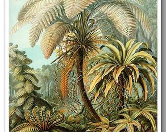 Prehistoric Ferns Botanical Art Print, Ferns Poster, Ernst Haeckel Botanical Illustration, Print, Poster, Educational Art,