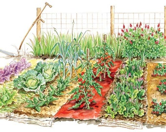 Organic Vegetable Seed 21 Non-GMO Garden Emergency Survival Heirloom Seeds Set open pollinated.