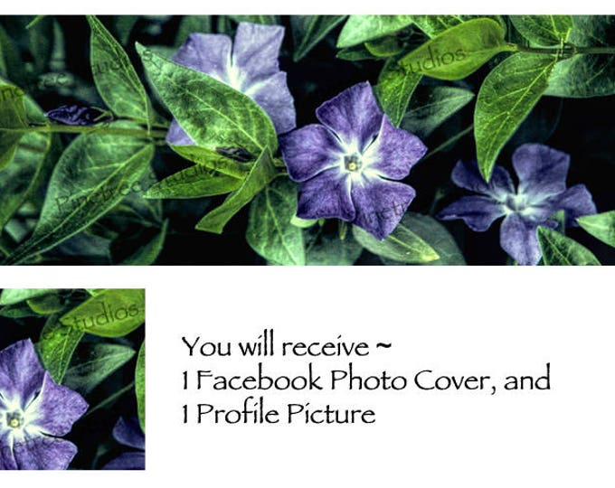 Vinca in Bloom ~ Facebook Blank Cover Photo and Profile Picture