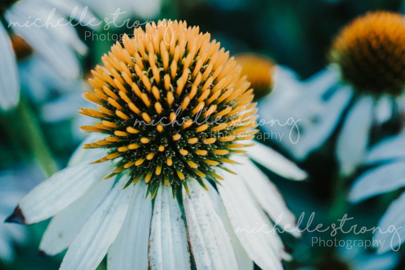Flower Photography, Nature Prints, Macro Photography, Home Decor, Fine Arts  Photography, Floral Prints, Botanical Photos, Photography Gifts