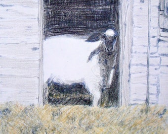 "Notecards of ""Sheep in Doorway"""