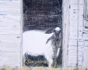 Sheep in Doorway notecards