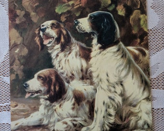 English Springer Spaniels are Ready for the Hunt!  - Two prints of Spaniels, Plus an Extra - Ready for Framing  - Vintage Wall Decor