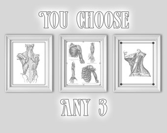 gray s anatomy heart poster powder blue red cardiology etsy