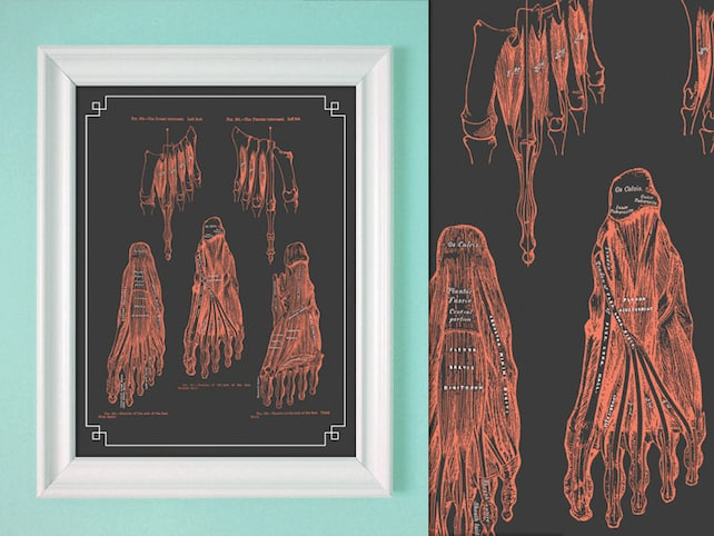 Grays Anatomie Fuß Muskeln Koralle grau Füße Massage Raum | Etsy