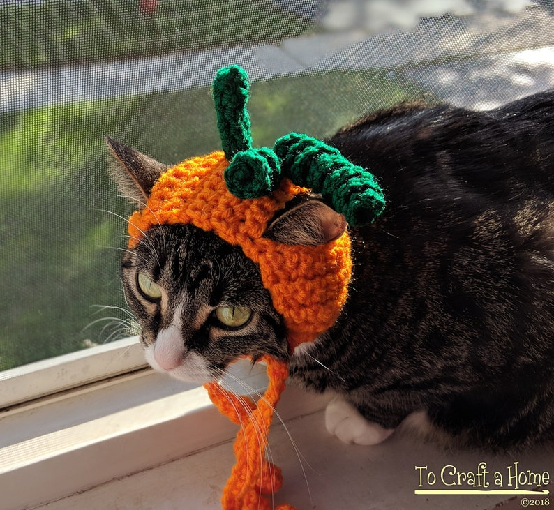 Pumpkin Cat Hat-Cat Hats Hats for Cats Pumpkin Cat image 0