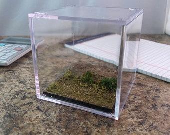 Large earthy stone path - Terrain Display Cube