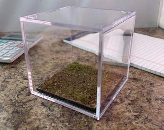 Woodlands - Terrain Display Cube