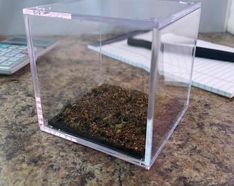 Dense forest - Terrain Display Cube