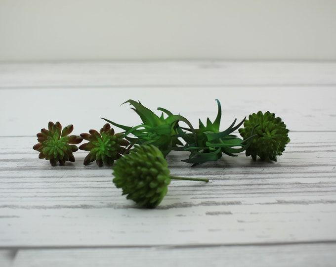 Rocks, Mosses, & Plants