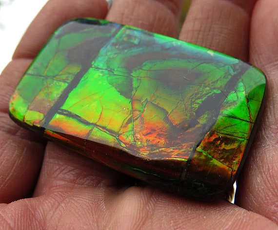 A large 2 inch across Wildly colorful Ammolite. Bear Paw Deposit, Canada