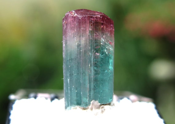 Bi-color Tourmaline crystal. Aricanga, San Jose de Safira, Minas Gerais, Brazil 3.28 gram. Pro mounted thumbnail in a perky box