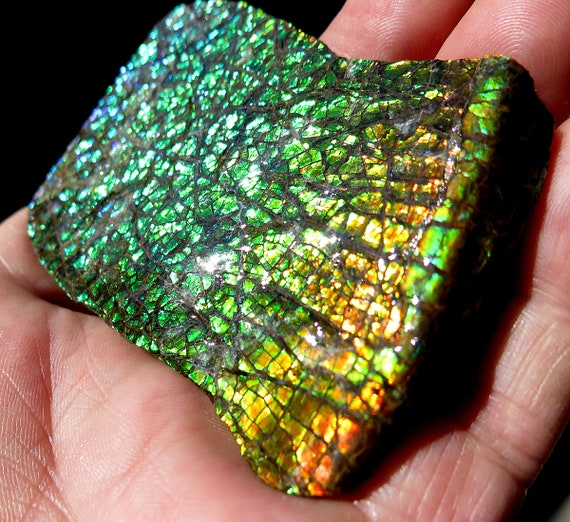 3 by 2 inch Ammolite Gem Fossil. High flash plate with COA. Mined at the Korite Mine, Alberta, Canada