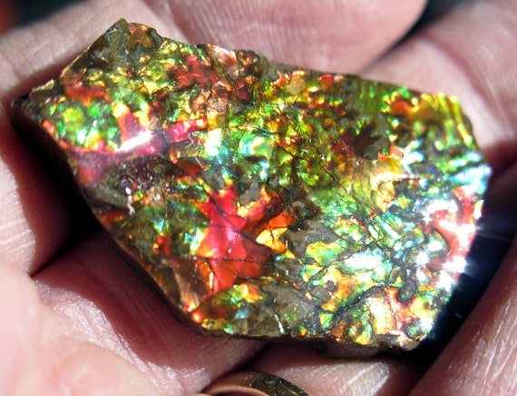 High flash 1.75 inch Ammolite from Korite Mine, Alberta, Canada. Comes with box as shown