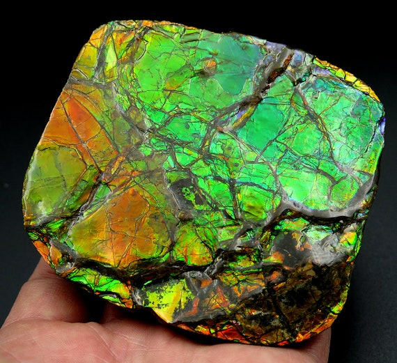 Large 3.5 by 3 inch Ammolite Gem Fossil. High flash plate with COA. Mined at the Korite Mine, Alberta, Canada