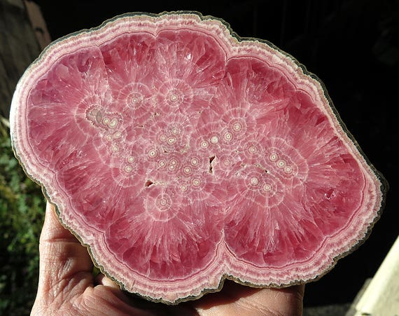Investment Grade. A 6.75 Inch Polished Rhodochrosite. Thick Cut at .5 inch. Old time Collection from Capillitas, Argentina.