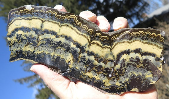 Large 7 inch by 3 inch Sphalerite Var. Shalenblende with Galena, Marcasite. Known to some as Baryte. Note the beauty large silver areas