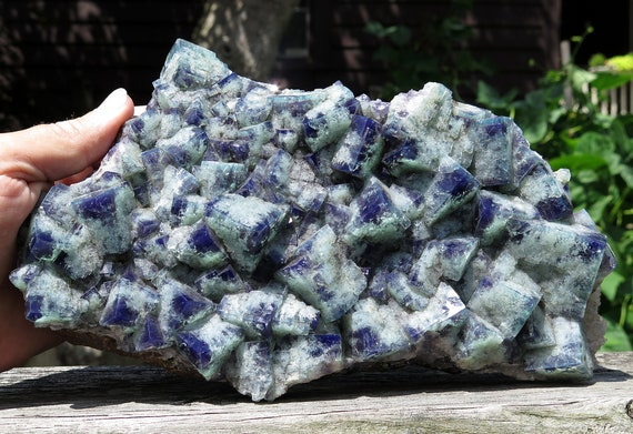 Huge 7 pound 11.8 oz. Color change Fluorite from Green Hill pocket. Diana Maria mine, Waredale, Co. Durham, U.K. 9.75 inch long