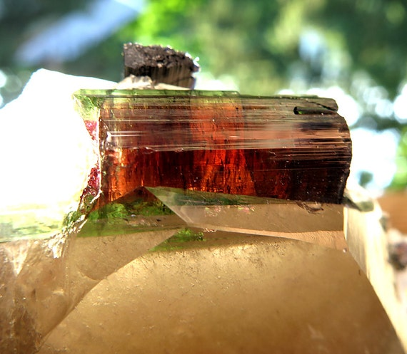 """3 inch Tabular Quartz with Watermelon Tourmalines Included. """"The Turtle"""""""