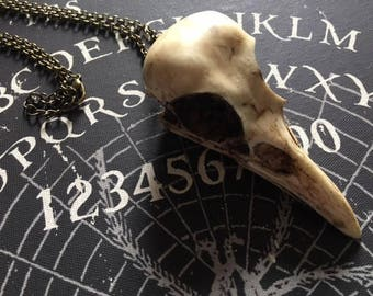 Resin cast crow skull necklace