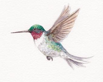 Ruby throated hummingbird print 5 x 7 watercolor