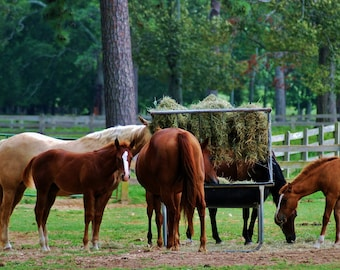 Nature Phototgraphy- Horses Gathering- Travel, Southern, Horse, Farm, Landscape, Fine Art Photography