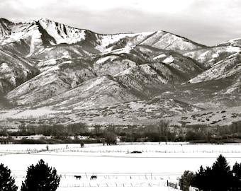 Nature Photography - Peaceful Scene in Park City, Utah - Travel, Winter, Landscape, Snow, Resort, Black & White, Horse, Fine Art Photography