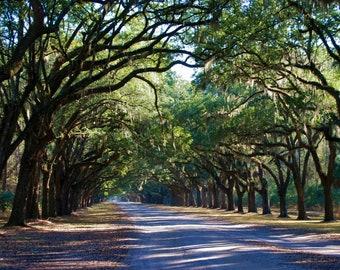 Nature Photography - Savannah's Wormsloe Plantation -Southern, Travel, Georgia, Trees, Pathways, Landscape, Green, Art, Fine Art Photography