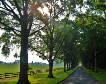 Nature Photography- Summer Morning Pathway Shaded In Green- Travel, Southern, Landscape, Fine Art Photography