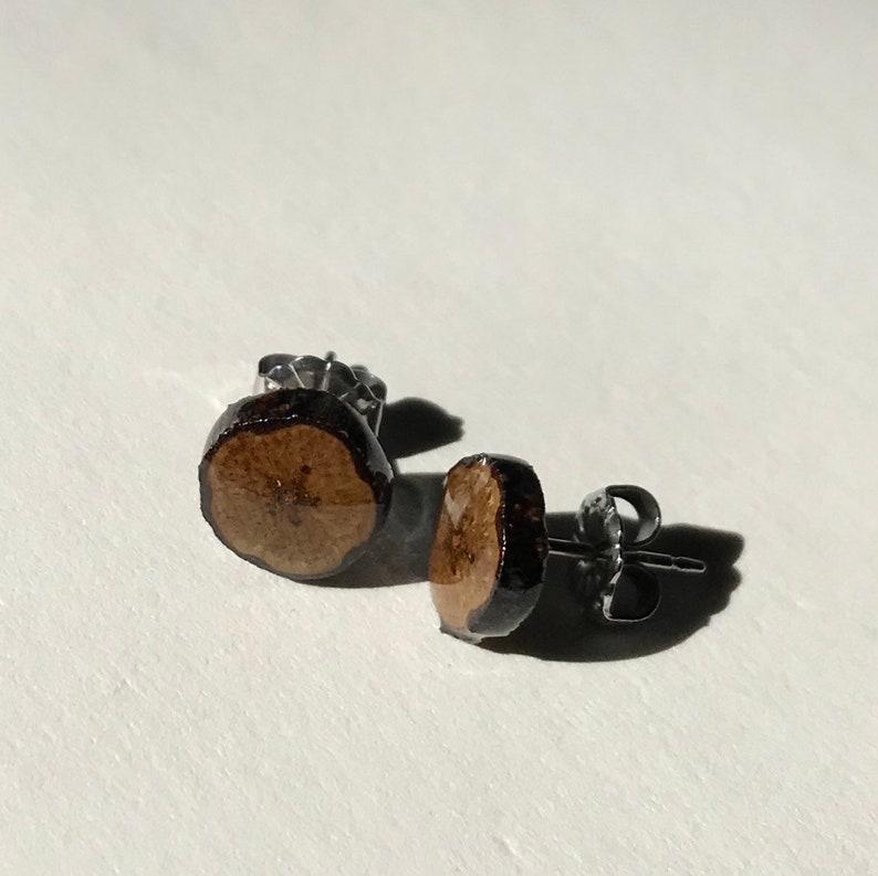 American Chestnut Twig Studs/ Twig Jewelry image 0