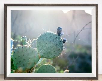 Cactus Art, Cactus Photography, Cactus Print, Cactus Photo, Nature Photography, Cactus Wall Art, Desert Print, Desert Photography