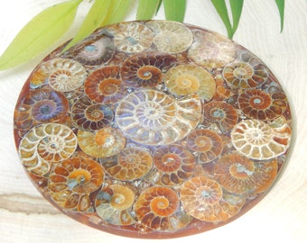 LARGE AMMONITE fossil Plate natural gemstone 4.89 oz - Reiki Wicca Pagan Geology gemstone decor fossil