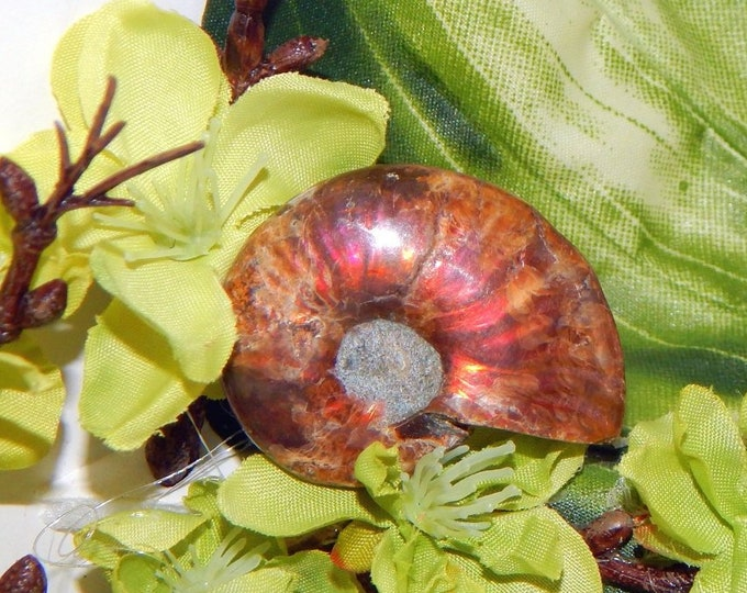 AMMOLITE red FOSSIL AMMONITE opalized shell - random selection 18-24g - Reiki Wicca Pagan Geology gemstone specimen