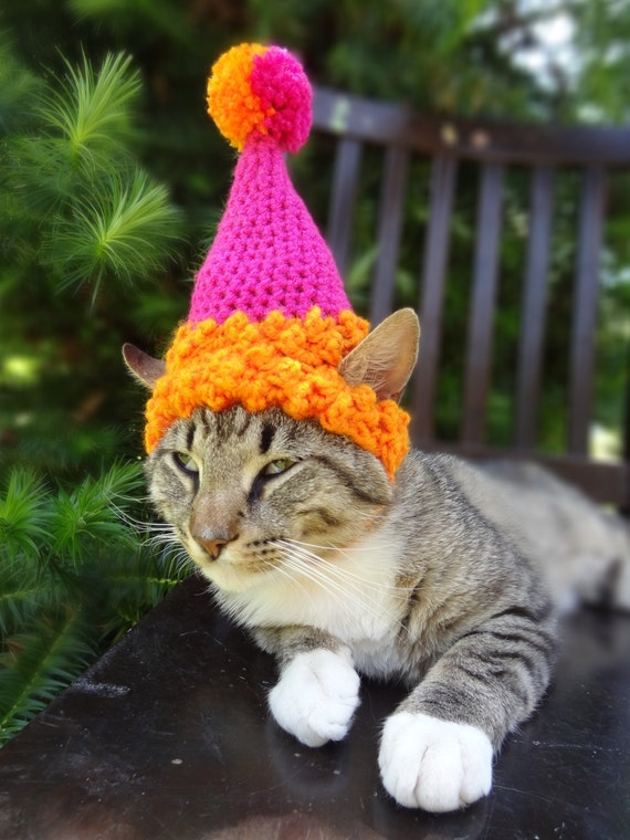 Pet Party Hat Birthday For Cats Cat